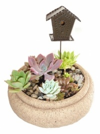 Bird House Succulent Garden